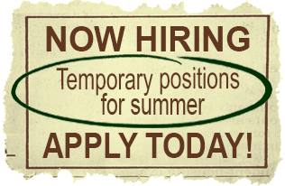 Now Hiring for summer graphic