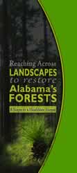 Reaching Across Landscapes to restore Alabama's Forests - 8 Steps to a Healthier Forest