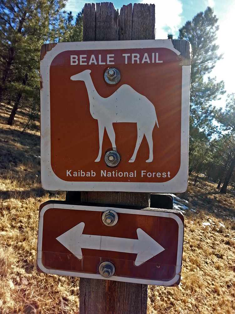 A camel sign on a wooden post on the Beale Wagon Trail