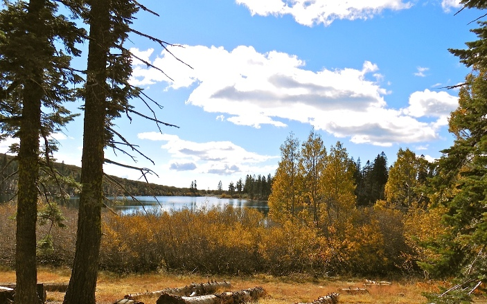 trees in fall foliage with Carr Lake in middle-ground