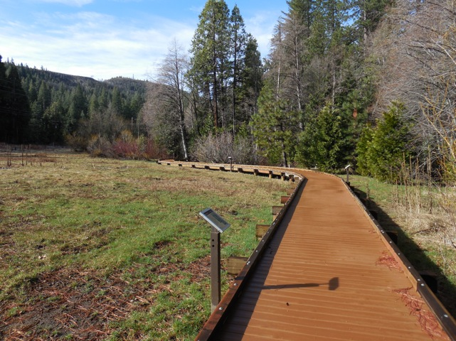 boardwalk trail through a meadow surrounded by mixed conifer and hardwood forest