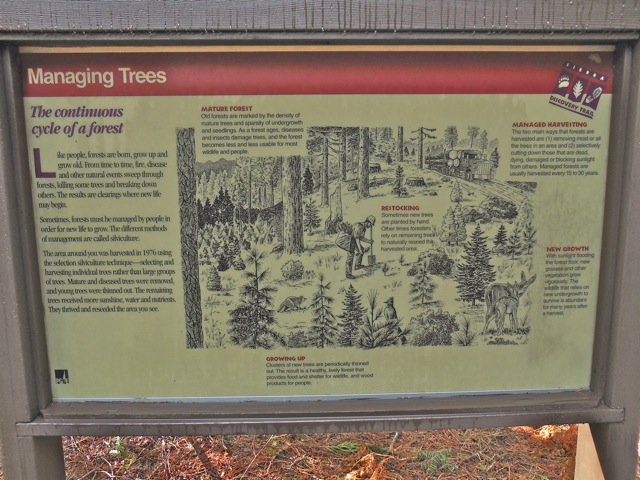 an interpretive sign depicting forest management practices
