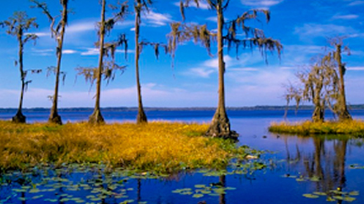 Visit the Osceola National Forest