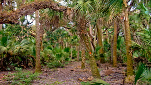 Visit the Florida National Scenic Trail