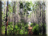 Volunteer on the Florida National Scenic Trail