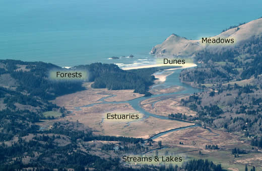 birds eye view of estuary with habitats labeled