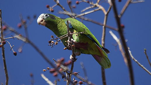 parrot feeding in a tree