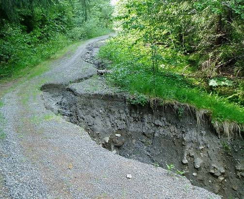 A forest road damaged by water flow diversion.