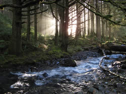 Stream in Rock Creek Wilderness with trees on back and light shafts radiating