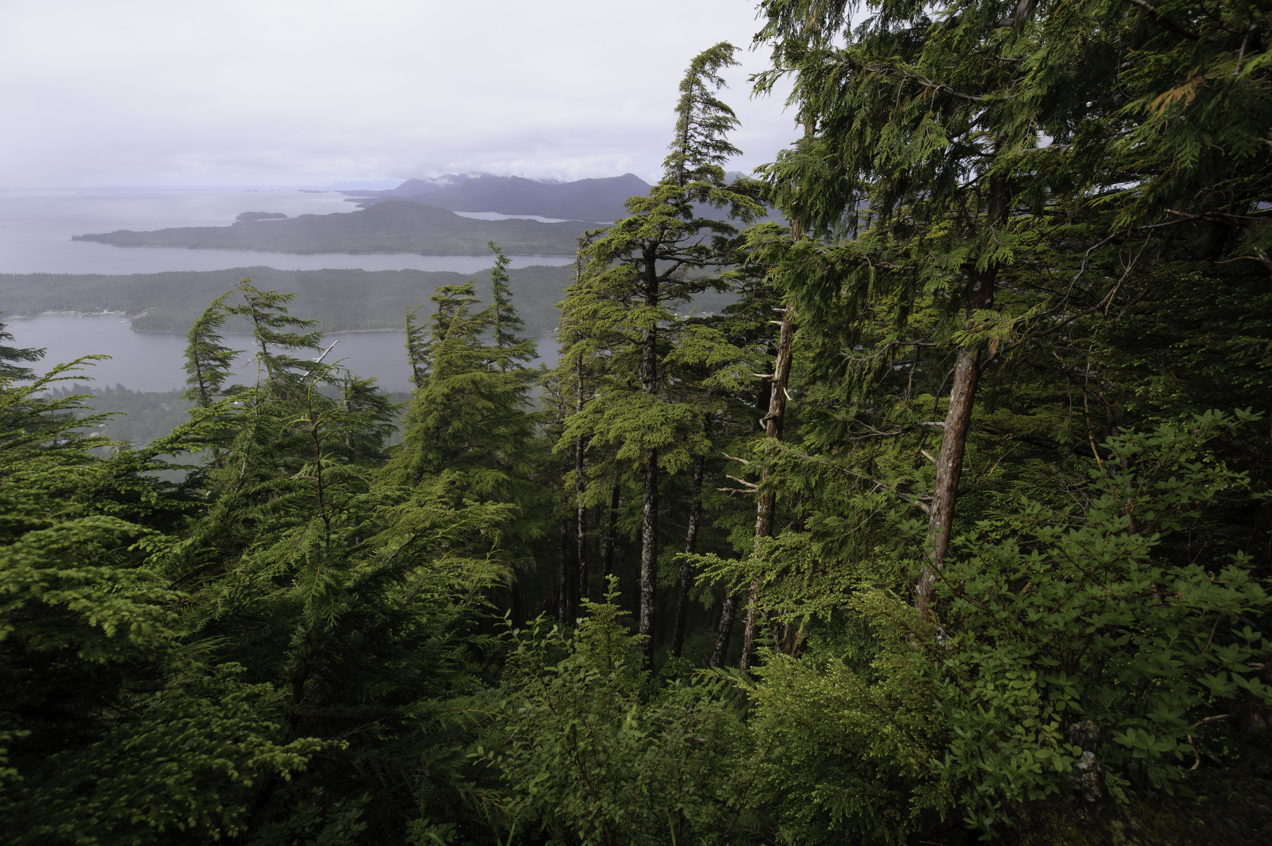 Tongass National Forest - Land & Resources Management