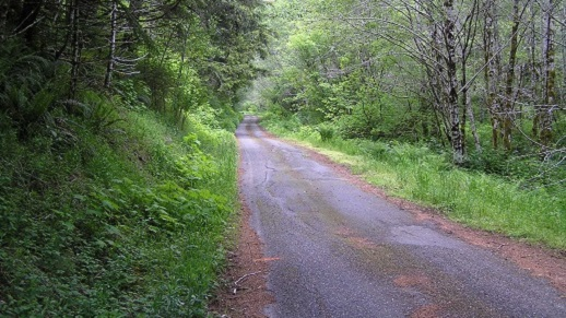 Forest Road 30 in Forks, Washington area
