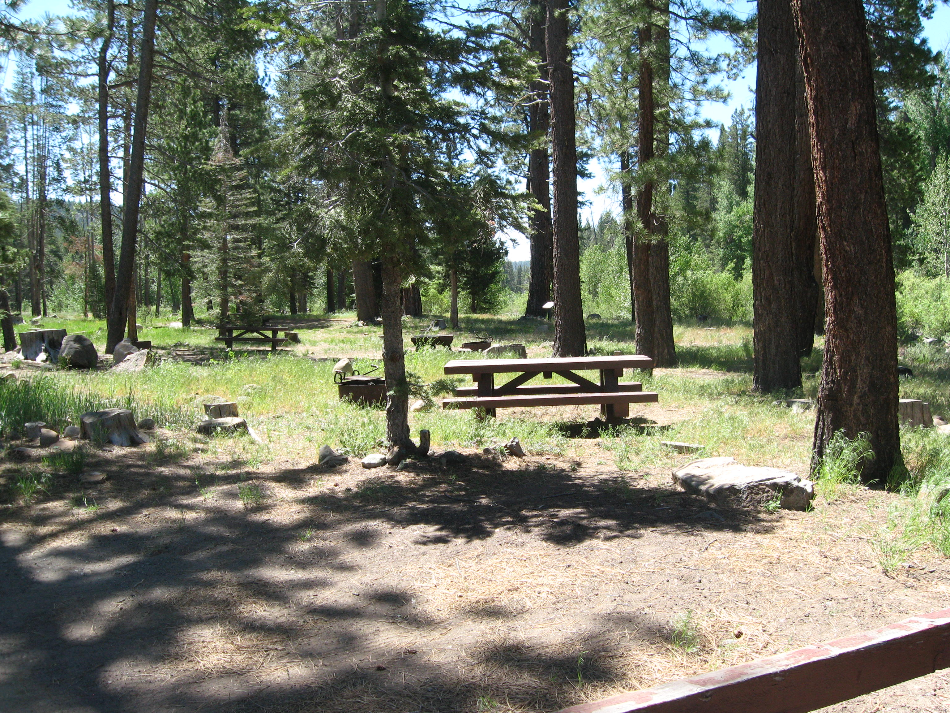 Picnic table, fire ring under pines