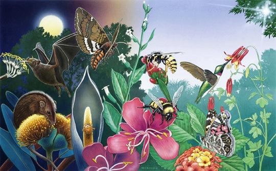 Pollinators Photo