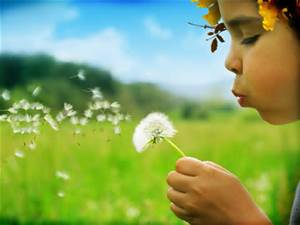 Small child blowing the seeds on a dandelion