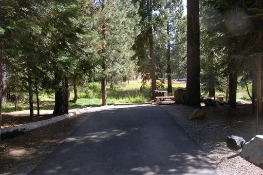 A typical forested campsite at Pass Creek Campground