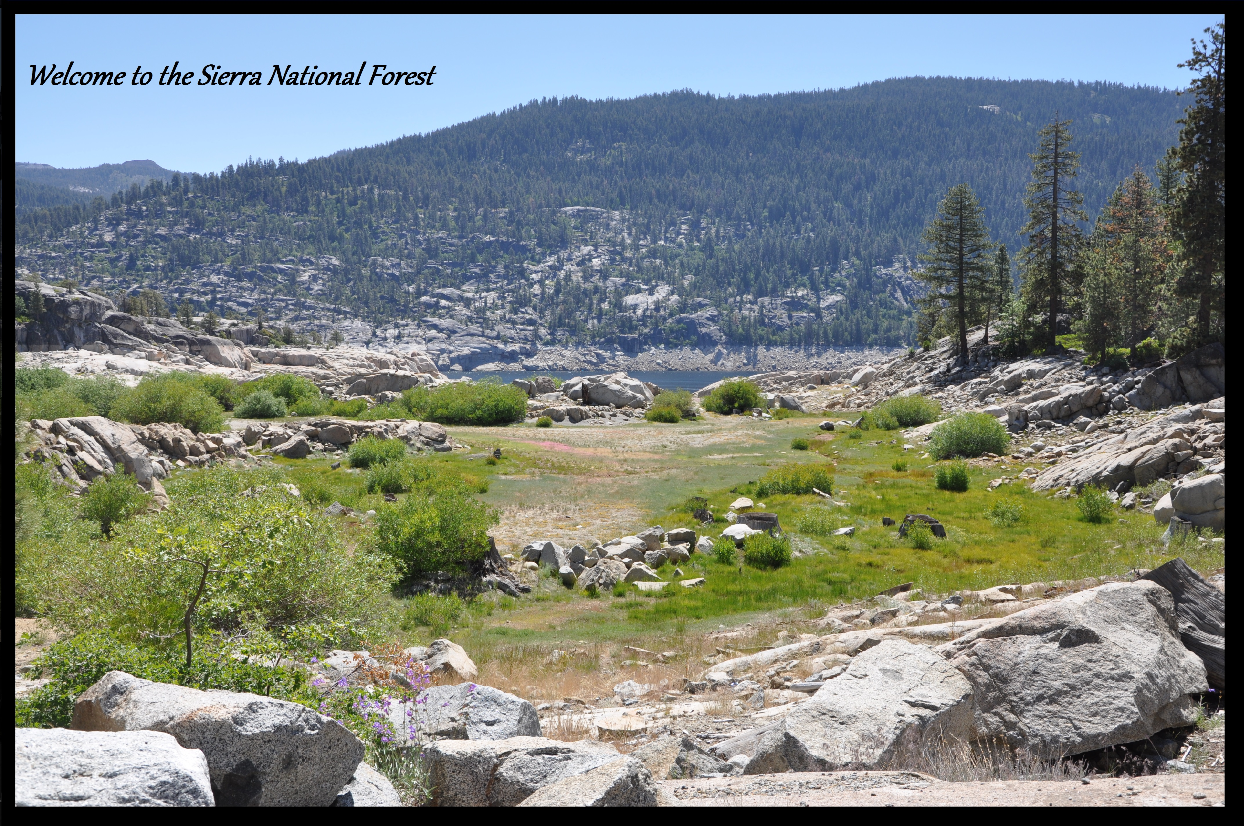 Sierra National Forest - Home
