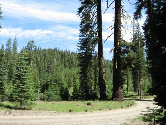 Campsite in the Yuba Pass Campground