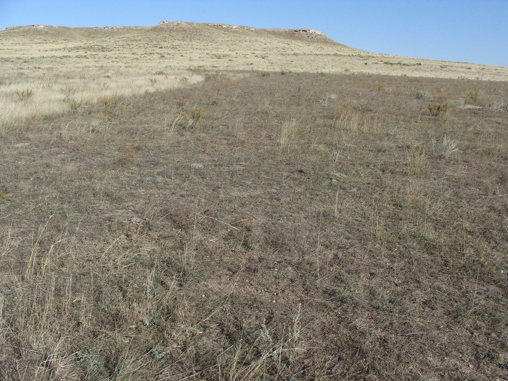 Sparse grass and bare dirt on a prairie