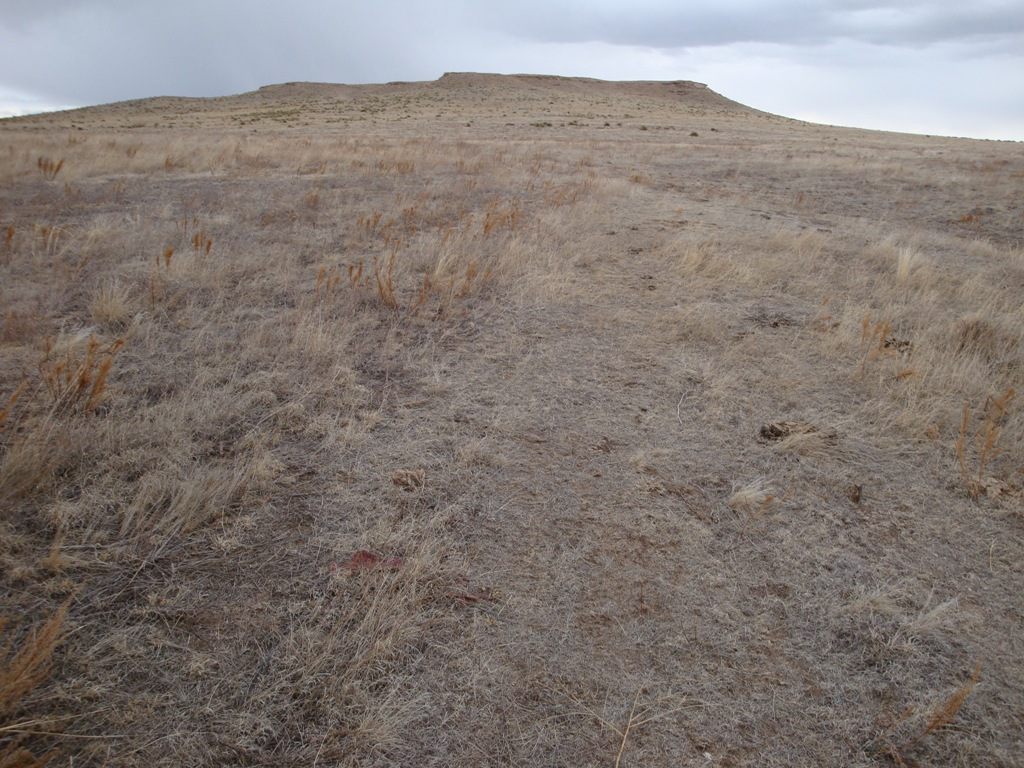 Dry grasses cover the ground on the prairie