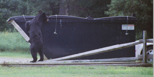 Bear visiting dumpster.