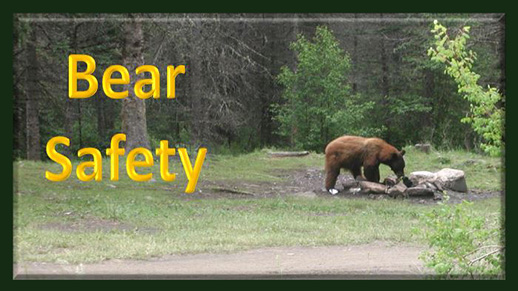 Bear Safety: Click on the photo for more information