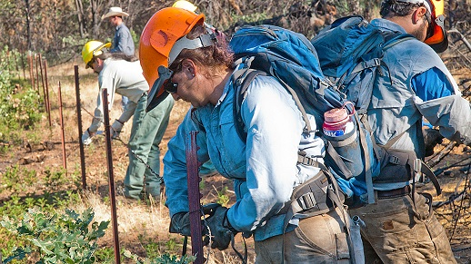 Student fence menders help Rim Fire recovery