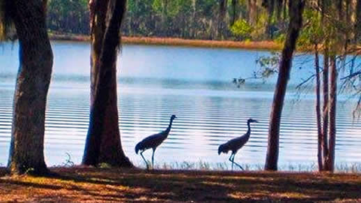Cranes at Doe Lake