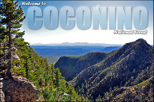 Image of Mogollon Rim