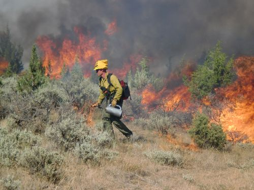 image of fire fighter with drip torch burnign sage in background
