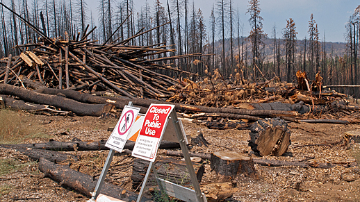 After the Rim Fire, biomass could add power to the grid.