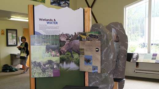 Photo of the Wetlands and Water, Forest Giants and Think like a Mink displays at the visitor center.