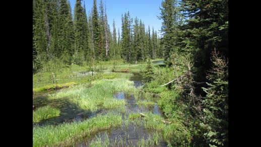 Photo of water in a grassy meadow surrounded by pine trees on the Sawtooth NRA