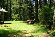 photo showing grassy clearing around picnic shelter