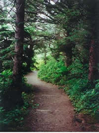 Whispering Spruce Trail through the sitka spruce with salal understory