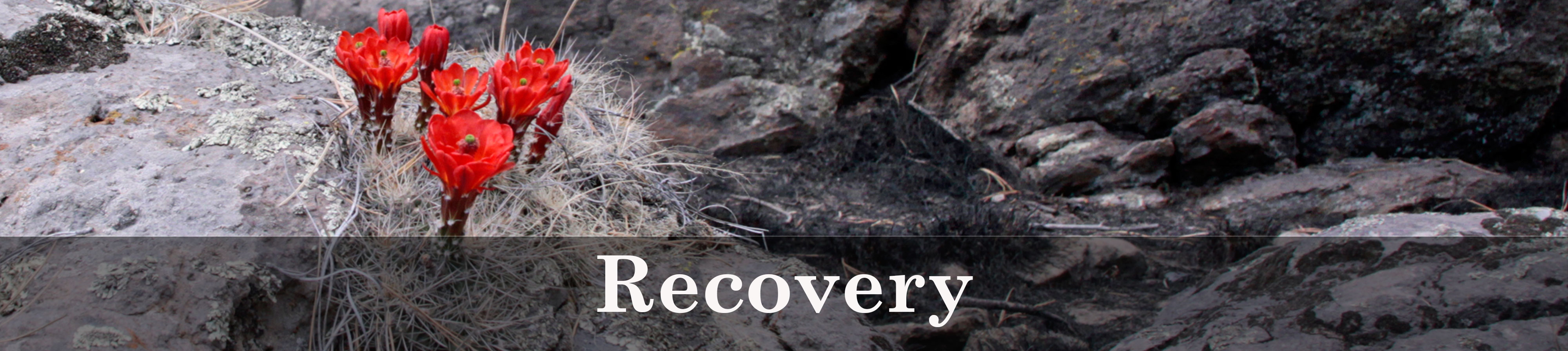 Wallow Fire Recovery