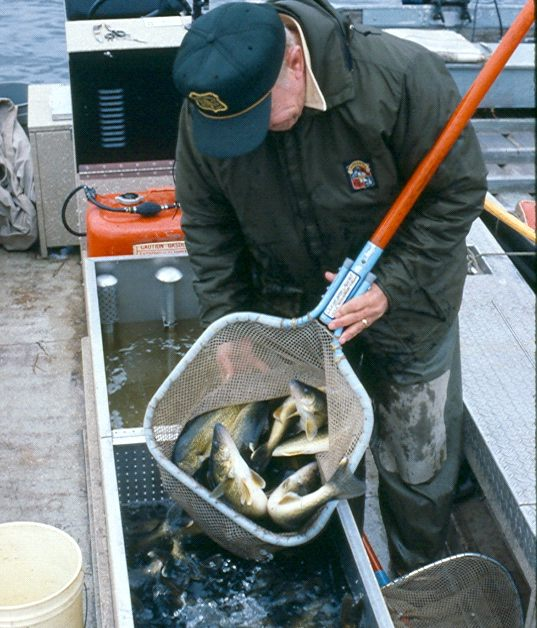 Forest Service fisheries biologists and volunteers evaluate fish catch