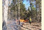 Rx Burn in Hardwoods