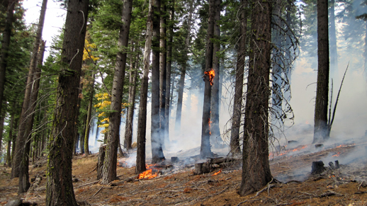 Prescribe fire photo5