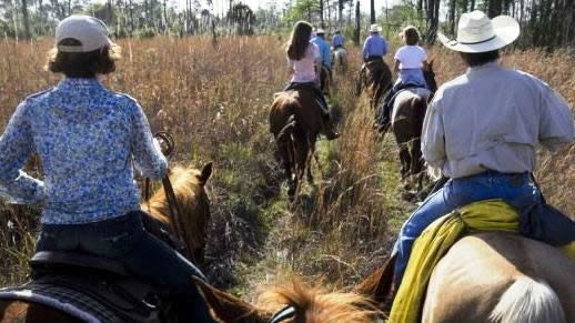 Horseback riding through open pine flatwoods and wet, scenic bays.