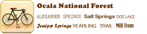 Ocala National Forest, Alexander Springs, Salt Springs, Doe Lake, Juniper Springs, Yearling Trail