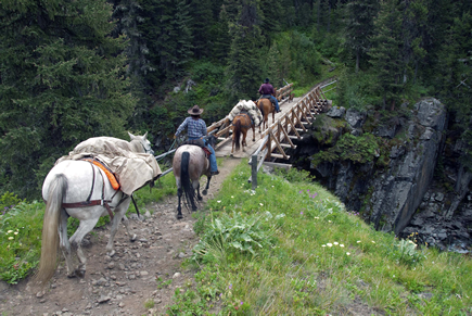 Horses packing gear into Absaroka - Beartooth Wilderness