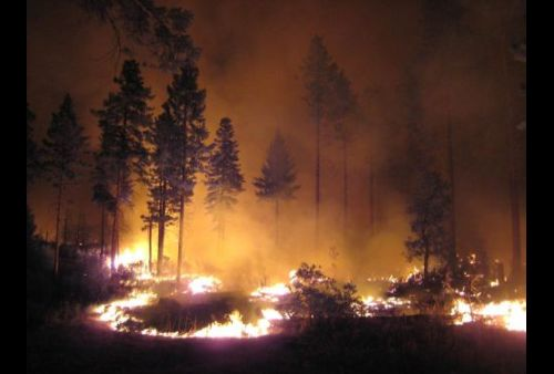 ground fire burning in a pine forest