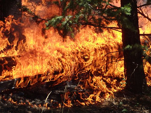close up of flames in the forest