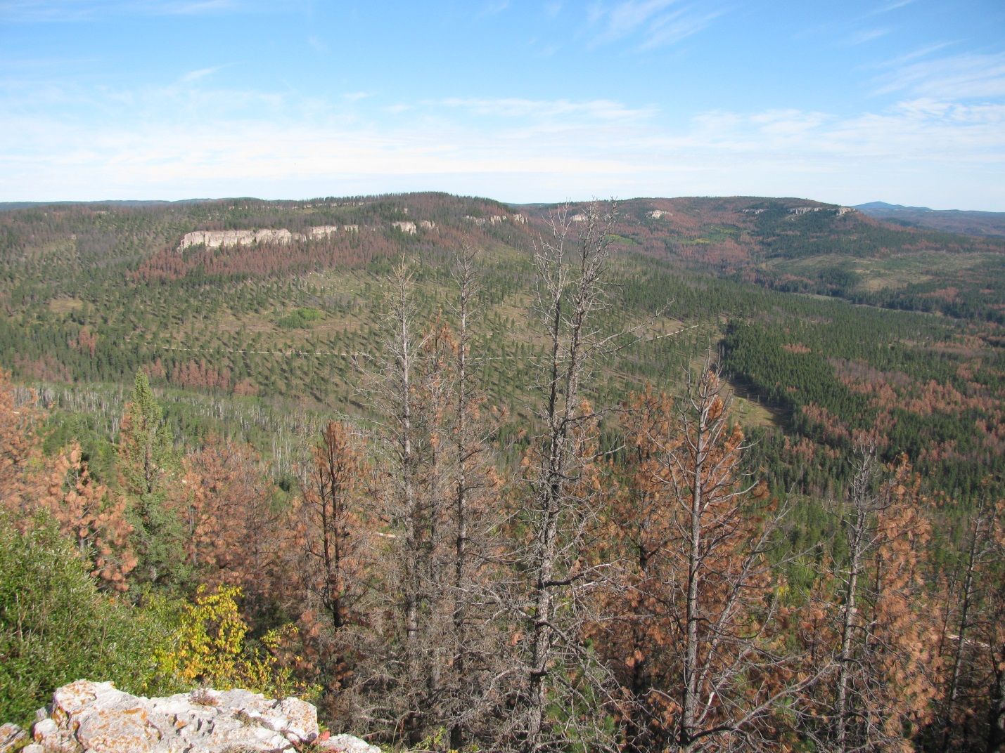 mountains with pine beetle killed trees with no needles mixed in with green forest