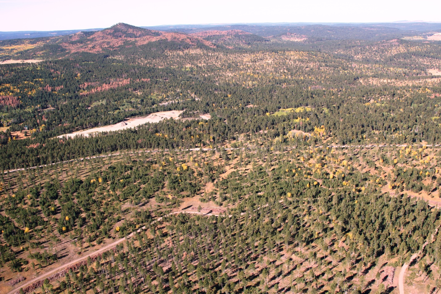 aerial view of beetle killed trees removed leaving only sparse green forest