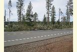 Photo of blowdown off Hwy 44 near Long Lake