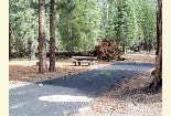 Photo of blowdown at Merrill Campground