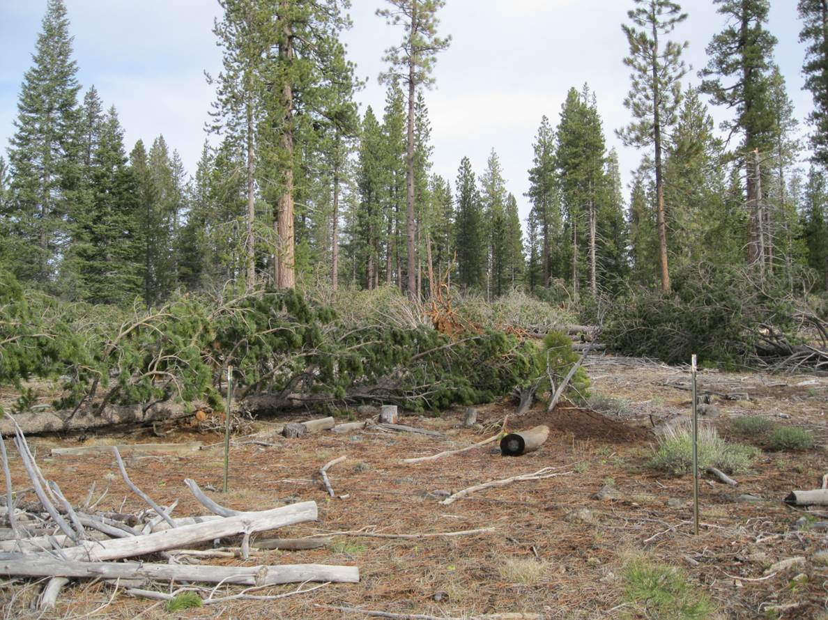Photo of blowdown near McCoy Flat Reservoir