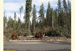 Photo of blowdown along Hwy 44, Eagle Lake RD