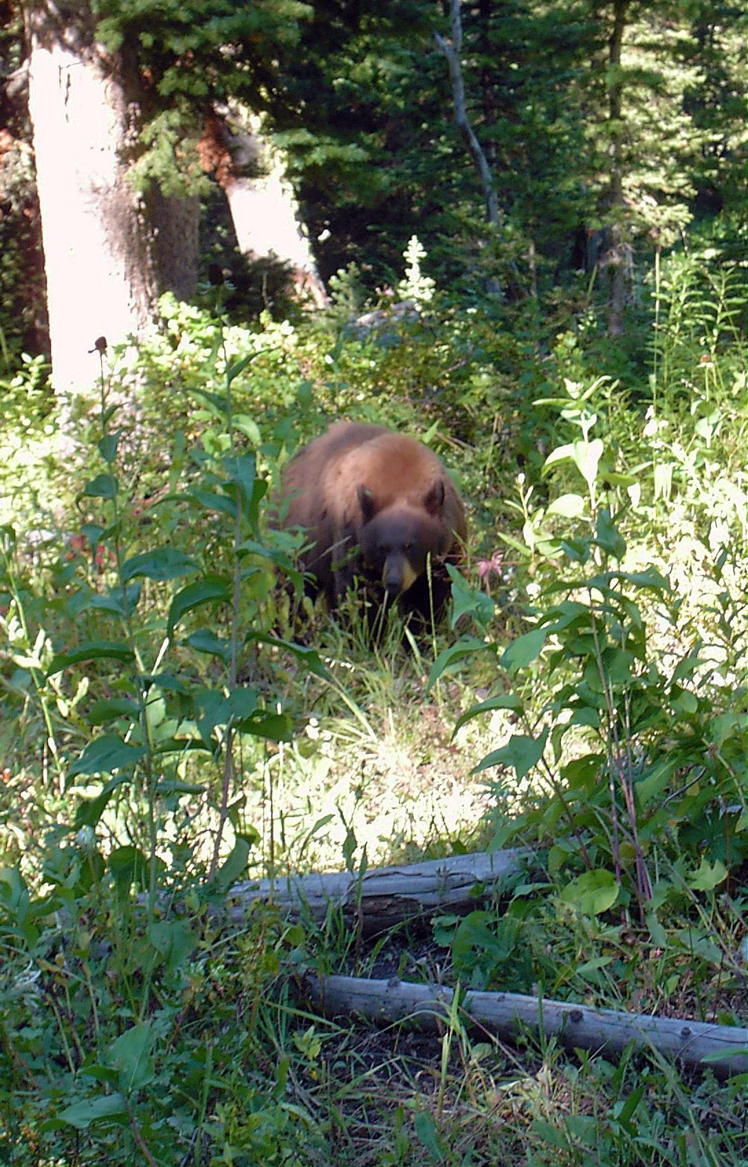 Sypes Canyon Trail With Bear Along